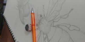dessin insecte